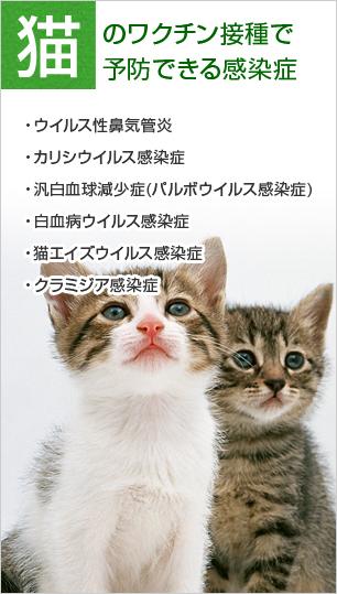 猫のワクチン接種で予防できる感染症