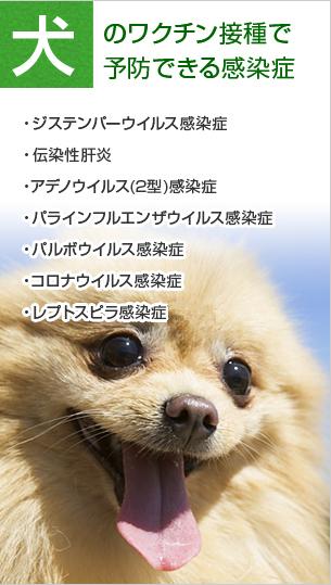 犬のワクチン接種で予防できる感染症
